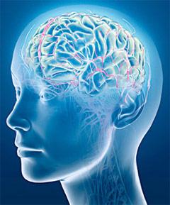 Накопление бляшек в головном мозгу