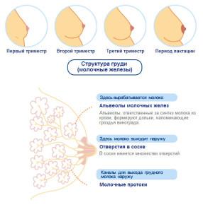 Причины ненормальных выделений из груди во время беременности
