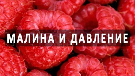 Целебные свойства малины, повышает или понижает давление, какое влияние оказывает на кровеносную систему
