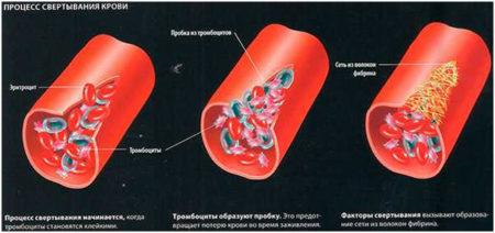 Показатели свертываемости крови, границы нормы у женщин, что показывает коагулограмма