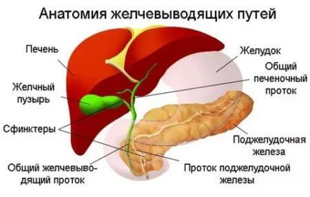 Свойства куркумы, повышается или понижается давление от ее употребления, показания к применению