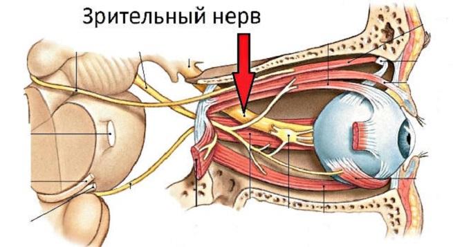 Местоположение нерва