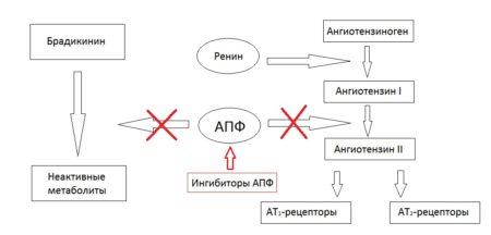 Эффективность бета-блокаторов, список препаратов при гипертонии, показания и противопоказания
