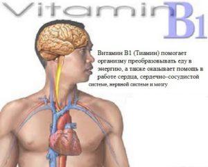 Что такое витамин В1