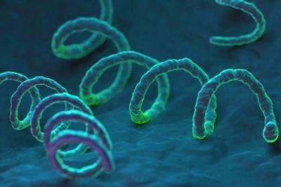 Эндоцервицит – что это за болезнь и как представлена во всем мире фото