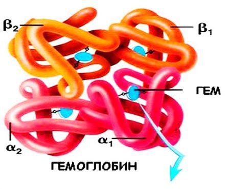 Как у детей можно повысить показатели гемоглобина медикаментозными и народными средствами