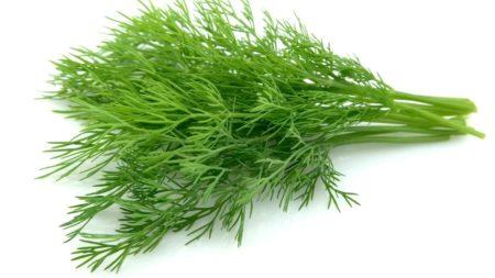 Клиническая эффективность семян укропа от высокого артериального давления, рецепты, противопоказания, показания и побочные эффекты
