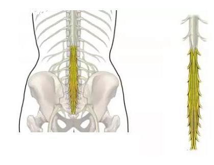 4 симптома синдрома конского хвоста у человека, как лечить, как обнаружить?