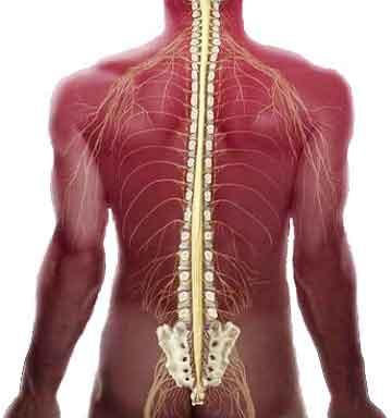 Редкая и тяжелейшая патология позвоночника фиксированный спинной мозг (только у 0,01% людей)