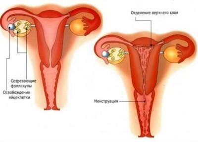 Нюансы работы организма женщины