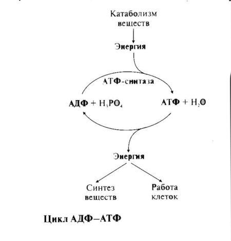 Механизм действия умных часов с измерением артериального давления и пульса, показания, противопоказания, обзор моделей и правила использования