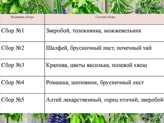 Рецепты травяных сборов для почек