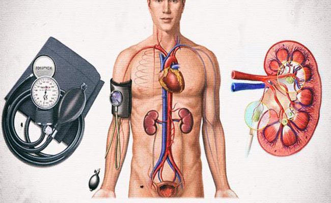 Гипертония и почки взаимосвязаны