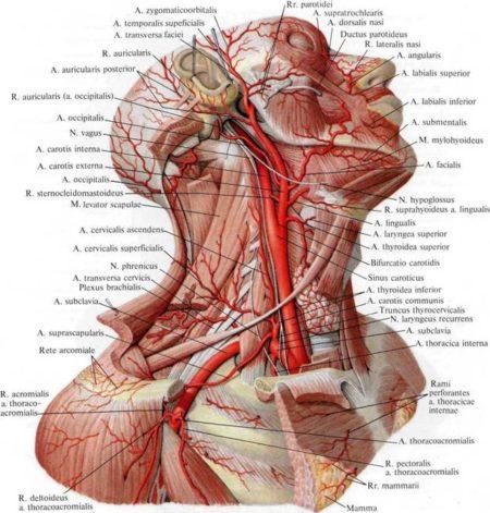 Что делать, если упали показатели артериального давления ниже 90 на 60, симптоматика, осложнения, методы лечения и профилактики