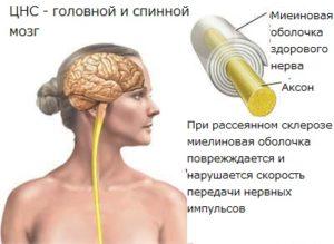 Строение нервных клеток