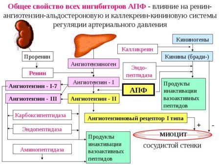 Показания к использованию Фозиноприла противопоказания, фармакодинамика, побочные эффекты и инструкция по применению