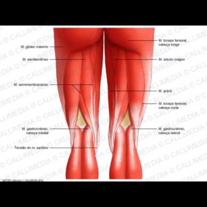 Как избавиться от боли под коленом