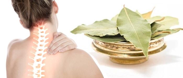Польза и вред лечения остеохондроза лавровым листом