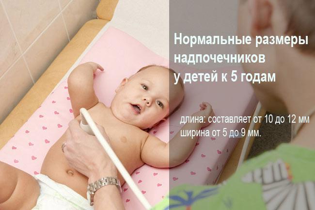 Нормальные размеры надпочечников у детей
