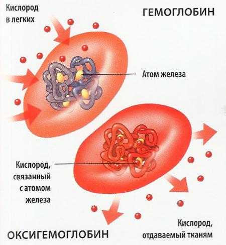 Насколько опасны отклонения средней концентрации Hb от нормы в эритроцитах крови?