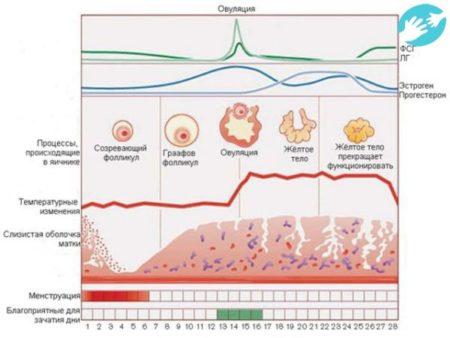 Причины низкого давления при месячных, симптомы и факторы, чем помочь