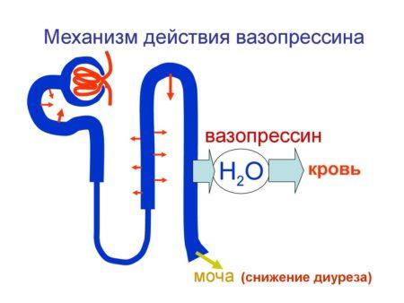 Механизм действия «Энама», при каком давлении назначается, противопоказания, инструкция по применению, взаимодействия и побочные действия