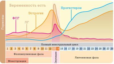 Особенности женского цикла