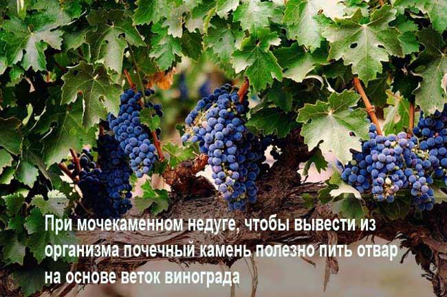Отвар из виноградных веток