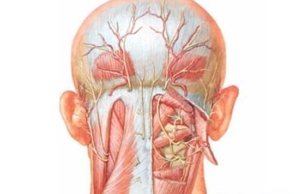 11 возможных заболеваний, когда болит шея и отдаёт немного в голову. Проверьте себя, возможно вам нужно в больницу!