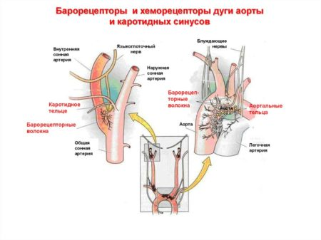 Какие продукты способны повышать артериальное давление у человека, причины гипотензии, патогенез и примерное меню гипертоника
