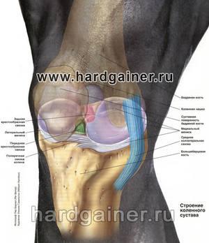 Причины боли под коленной чашечкой