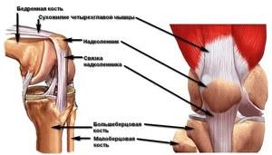 Какие болезни могут вызывать боль в колене