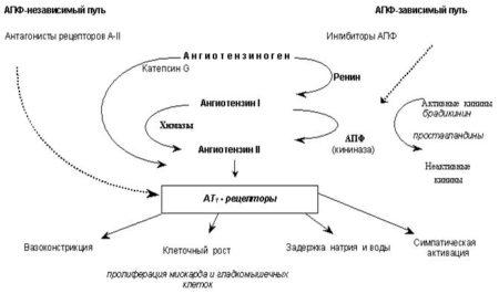 Что лучше помогает при гипертонической болезни и механизм действия «Физиотенза» или «Капотена»