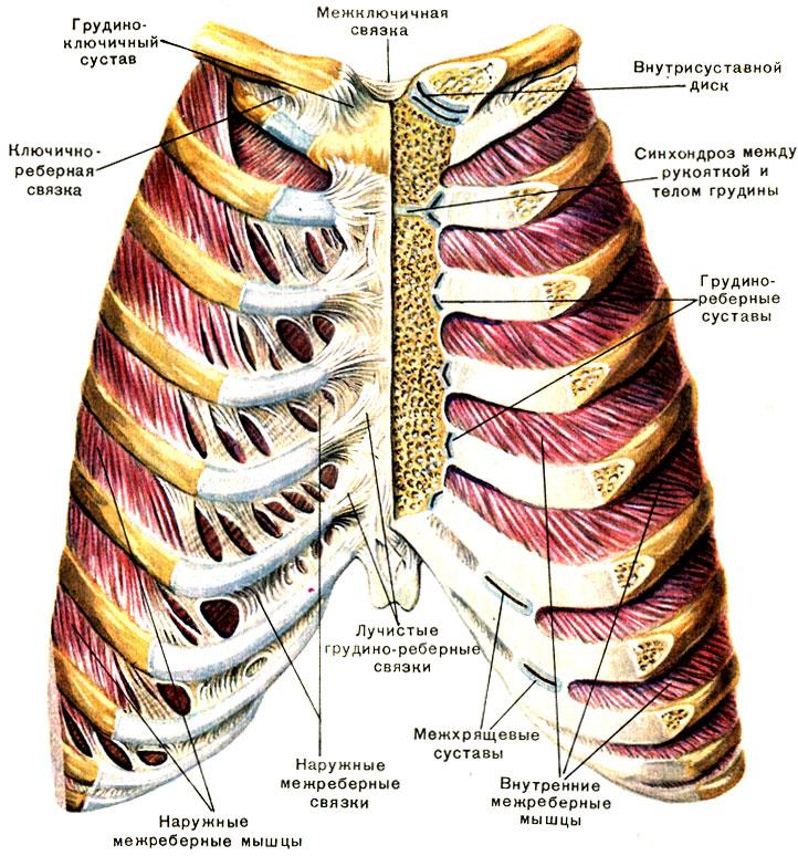 Артроз реберно-позвоночных сочленений 3 этапа развития и причины