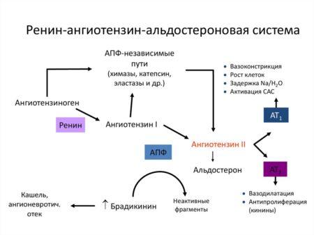 Сколько нужно пить воды при диагнозе гипертония, методы лечения гипертонической болезни, профилактика и возможные осложнения гипергидратации