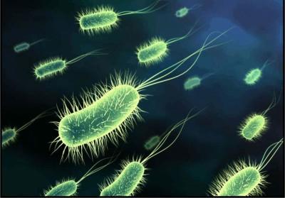 Диагностика инфицирования уреаплазмой