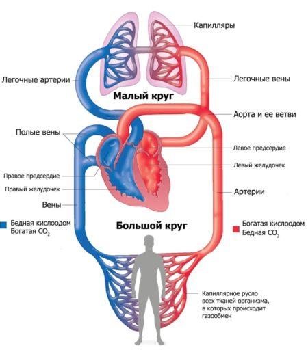 Показания к назначению дыхательной гимнастики при эссенциальной гипертонии, противопоказания и клиническая эффективность