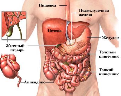 Анатомия мужчины
